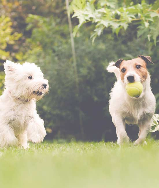 Pet-friendly apartments in Gainesville, GA