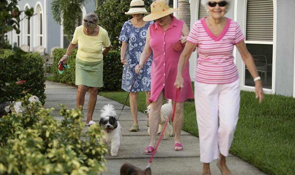 Activities and walking groups at Regency Park