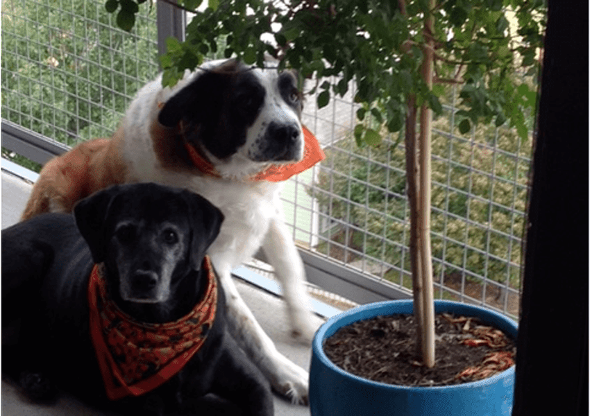 The Depot - April/May 2015 Pup of the Month - Lily and Bonnie