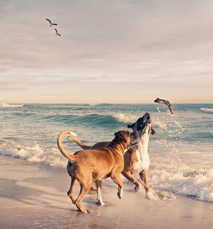 Pet friendly apartments at Montecito Apartments at Carlsbad