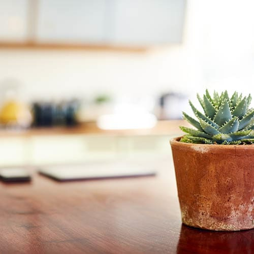 Plant on desk at CentrePoint Apartments