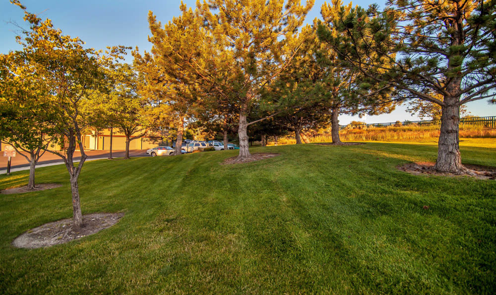 Park Area At Monterra Townhomes In Boise ID