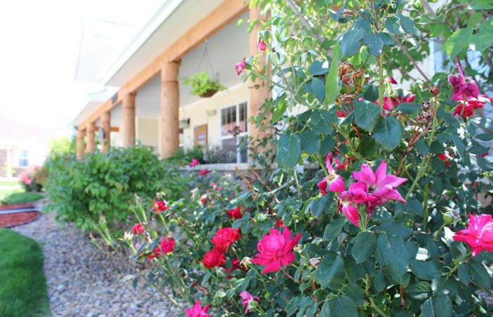 There's nothing like a stroll through our senior living community here at New Dawn Memory Care when the flowers are in bloom!