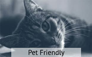 Pet friendly apartments in Springfield
