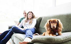 Read our Huntersville apartments pet policy