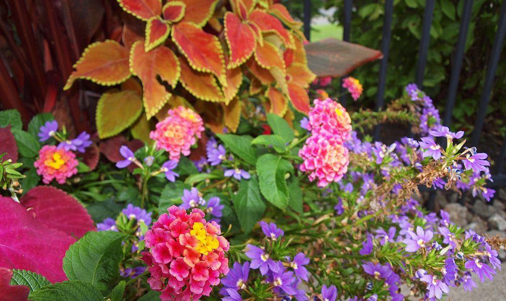 beautiful flowers at The Landings at Beckett Ridge in