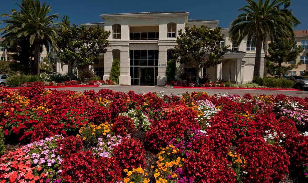 Beautiful Garden At Apartments In Santa Clara