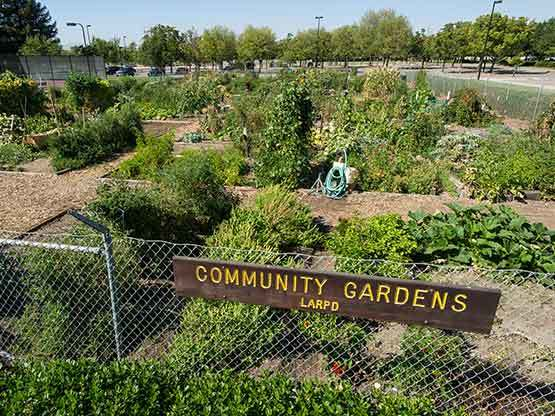 Community Garden at La Vina Apartments
