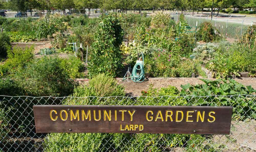 Community gardens at apartments in Livermore, CA