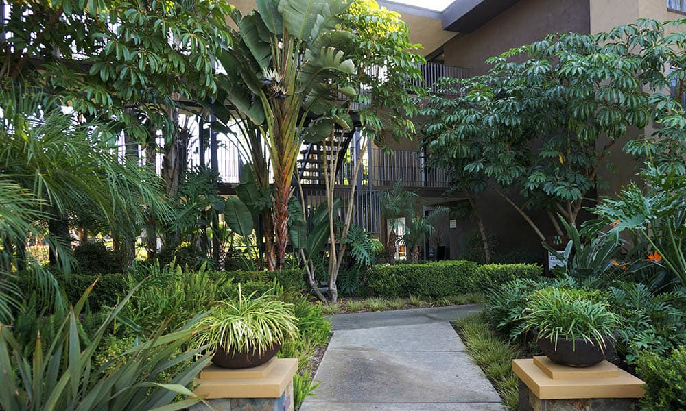 Pathway Through The Greenery at UCE Apartment Homes in Fullerton, CA