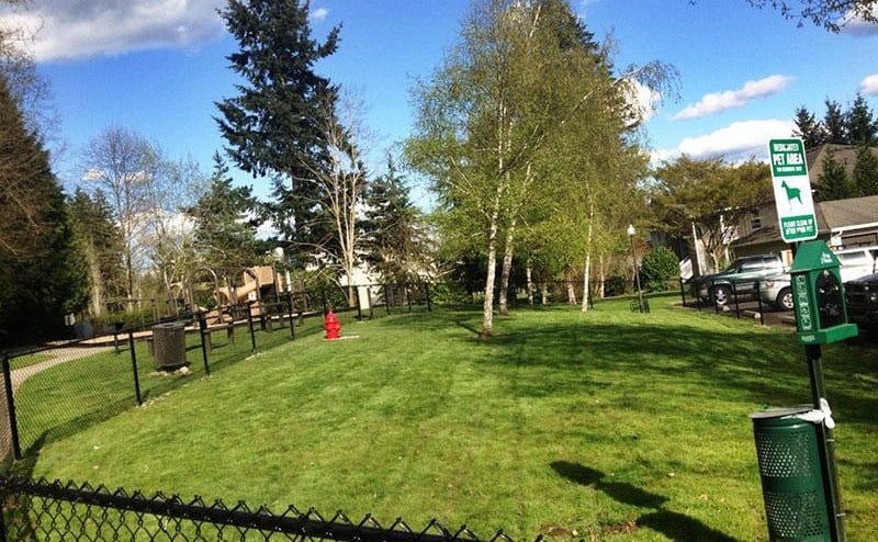 Dog park at the apartments in Sammamish