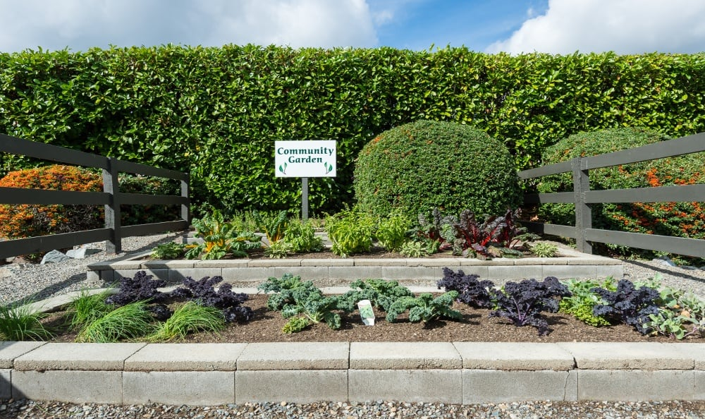 Community garden at Edgewood Park Apartments