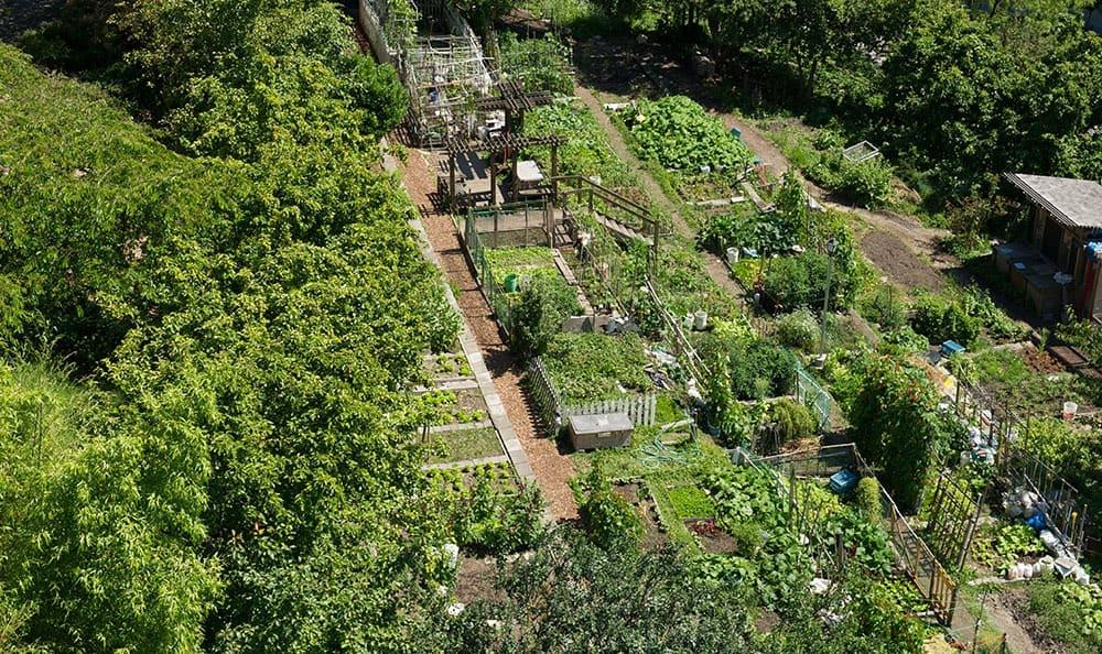 Community garden at Metropolitan Park Apartments in Seattle, WA