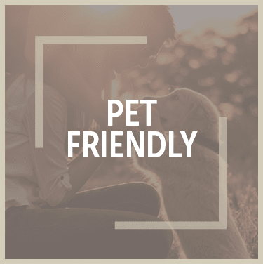 Pet friendly apartments in Webster