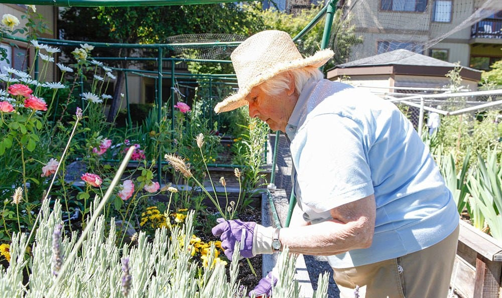 Resident tending to the garden at the senior living community in Santa Rosa