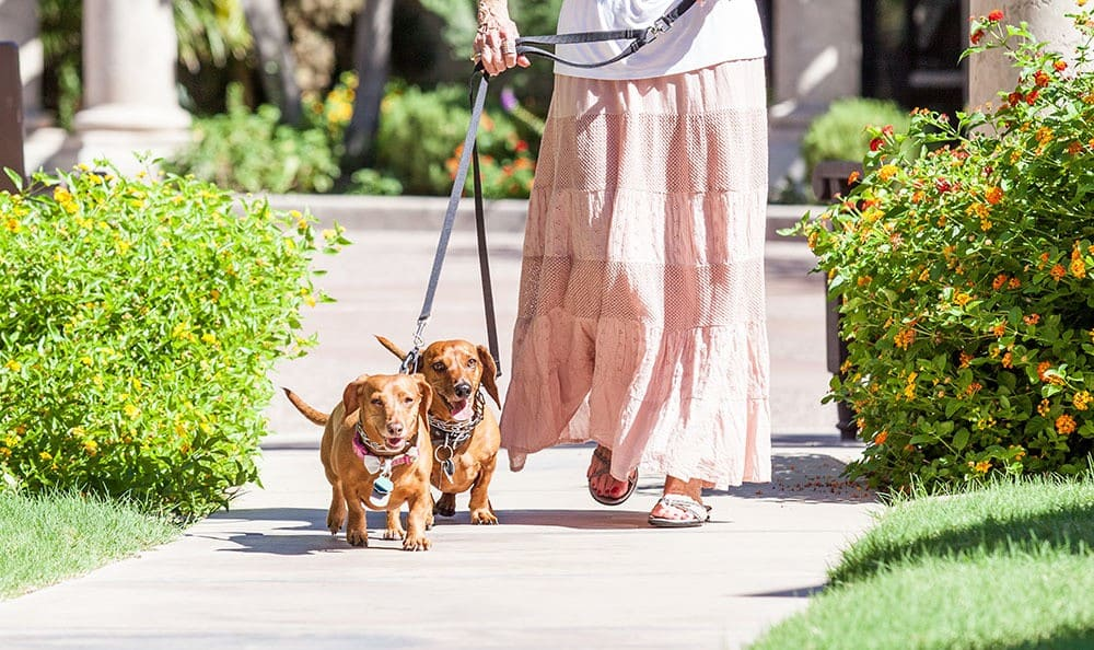 Tuscany at McCormick Ranch Senior living community in Scottsdale is pet-friendly
