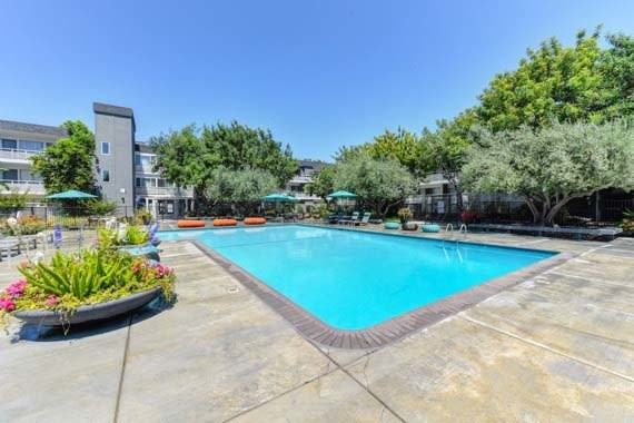 A swimming pool that is great for entertaining at Citra in Sunnyvale, CA