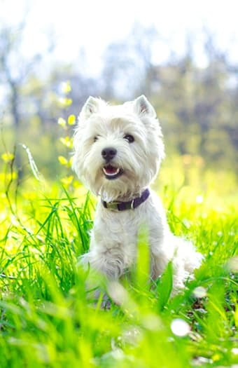 Pet friendly apartments in Woodland Hills