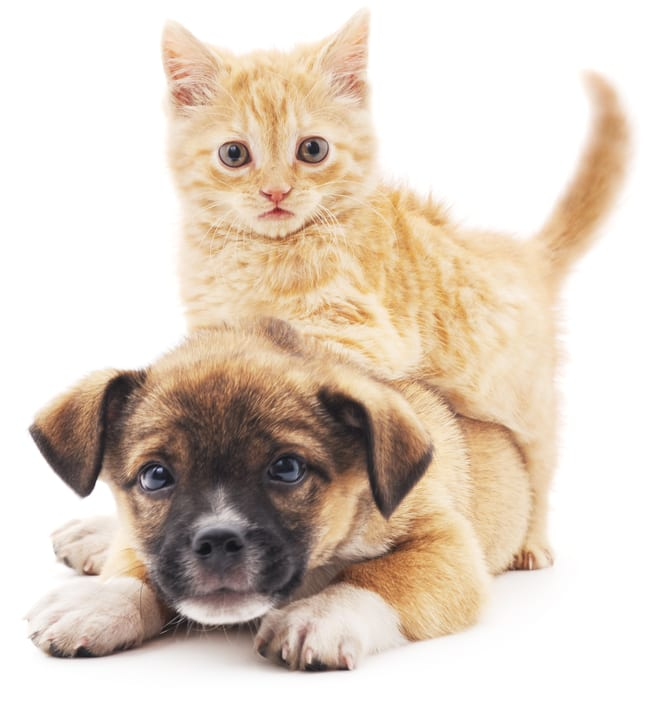 Kittens and puppies are favorites at Sofi Belmont Hills