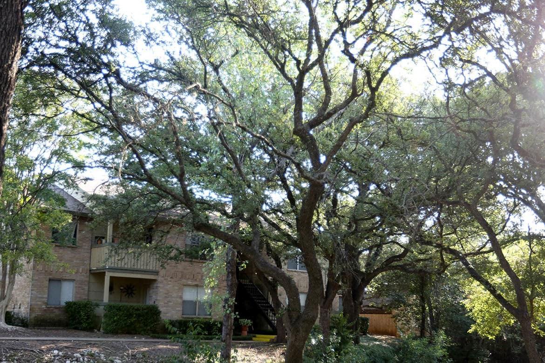 Bent trees around apartments