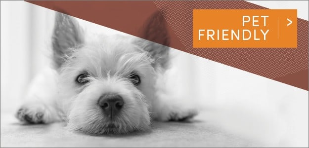 Station 40 offers Pet Friendly apartments in Nashville, Tennessee