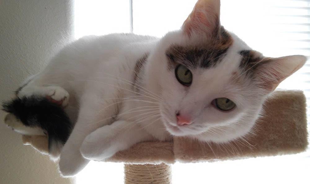 Akira Yamaoka Cat at San Antonio