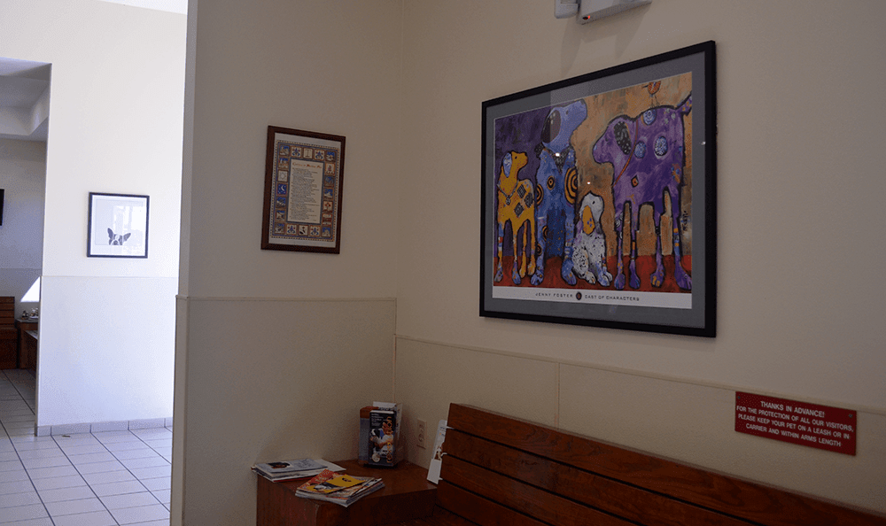 Lobby and waiting room at St. Francis of Assisi Veterinary Medical Center