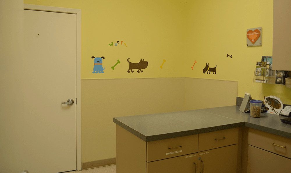 Viewing the exam room at St. Francis of Assisi Veterinary Medical Center