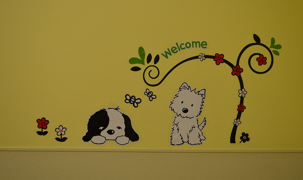 Welcoming exam rooms at St. Francis of Assisi Veterinary Medical Center