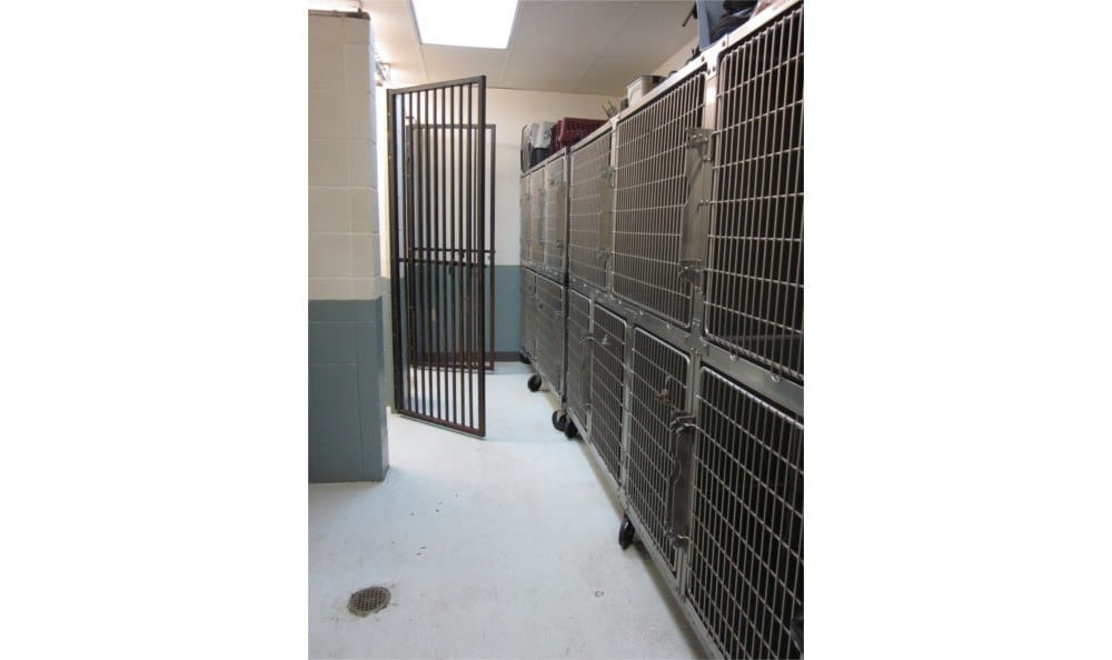 Our kennels at Coronado Veterinary Hospital