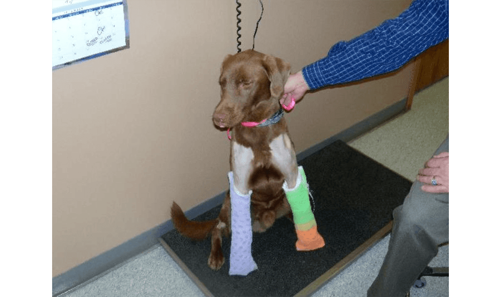 Dog With Two Casts