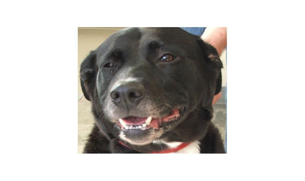 Brilly Testu the Dog at Lynnwood animal hospital