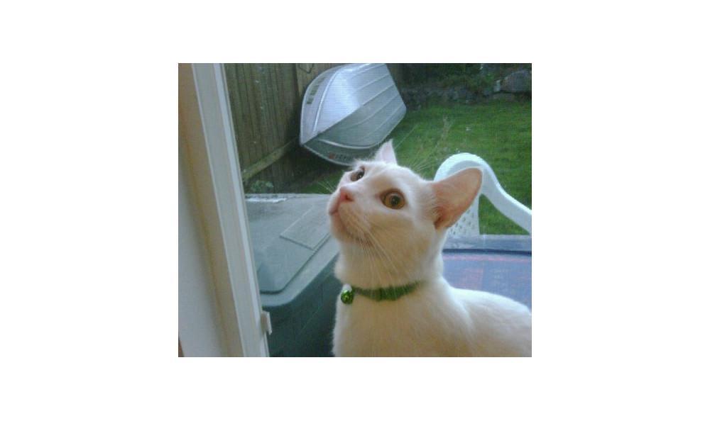 Buckley Kinser the cat at Lynnwood animal hospital