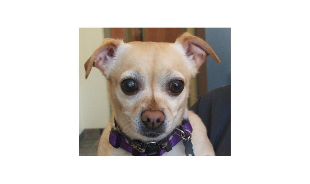 Dobbs Mia the Dog at Lynnwood animal hospital