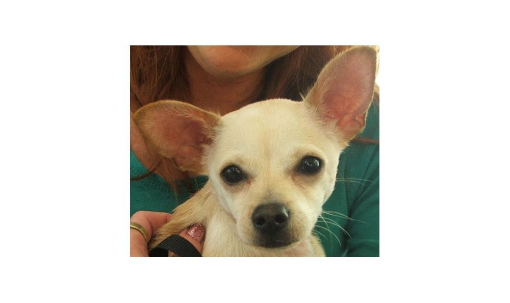 Harley D.agar the Dog at Lynnwood animal hospital
