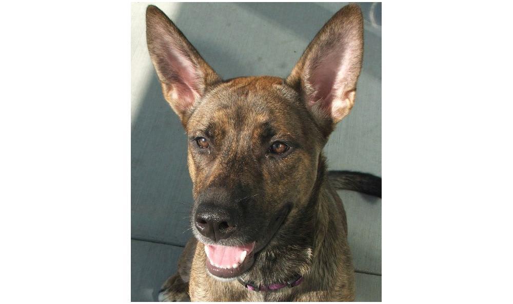 Ingolfsland Rhya the Dog at Lynnwood animal hospital