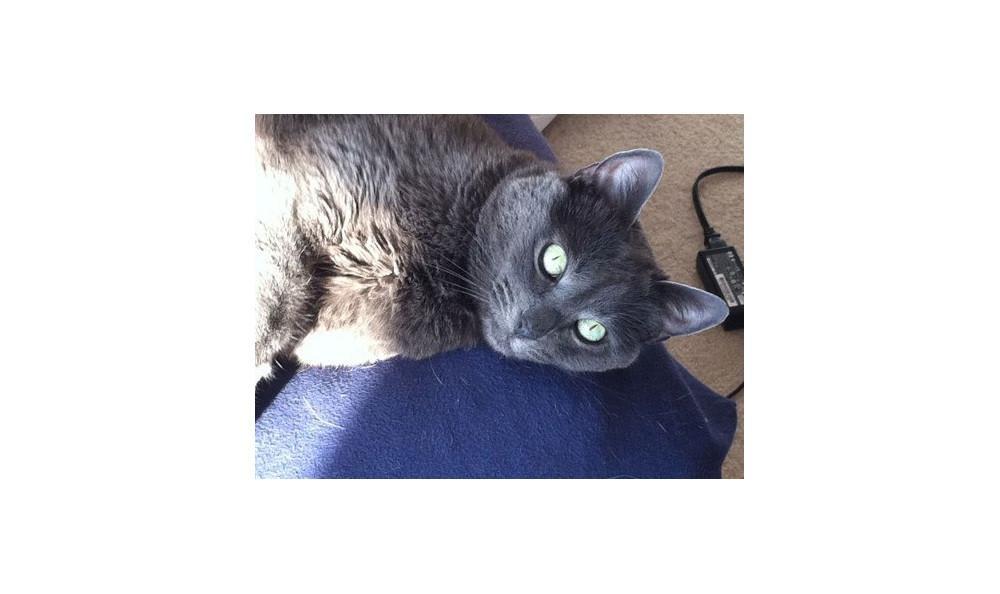 Kinser-Reaganthe cat at Lynnwood animal hospital