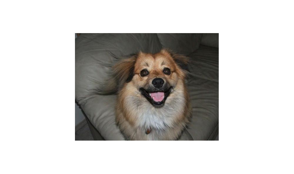 Koda Kinser the Dog at Lynnwood animal hospital