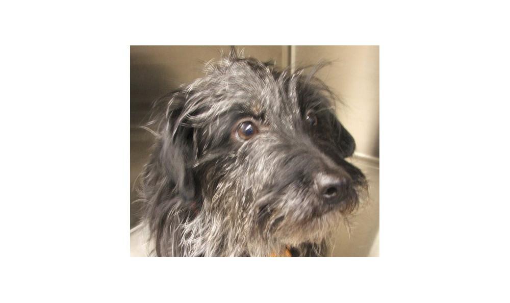 Markie St.mary the Dog at Lynnwood animal hospital