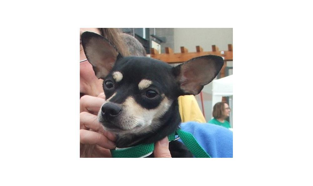 Mcginnis Lola the Dog at Lynnwood animal hospital