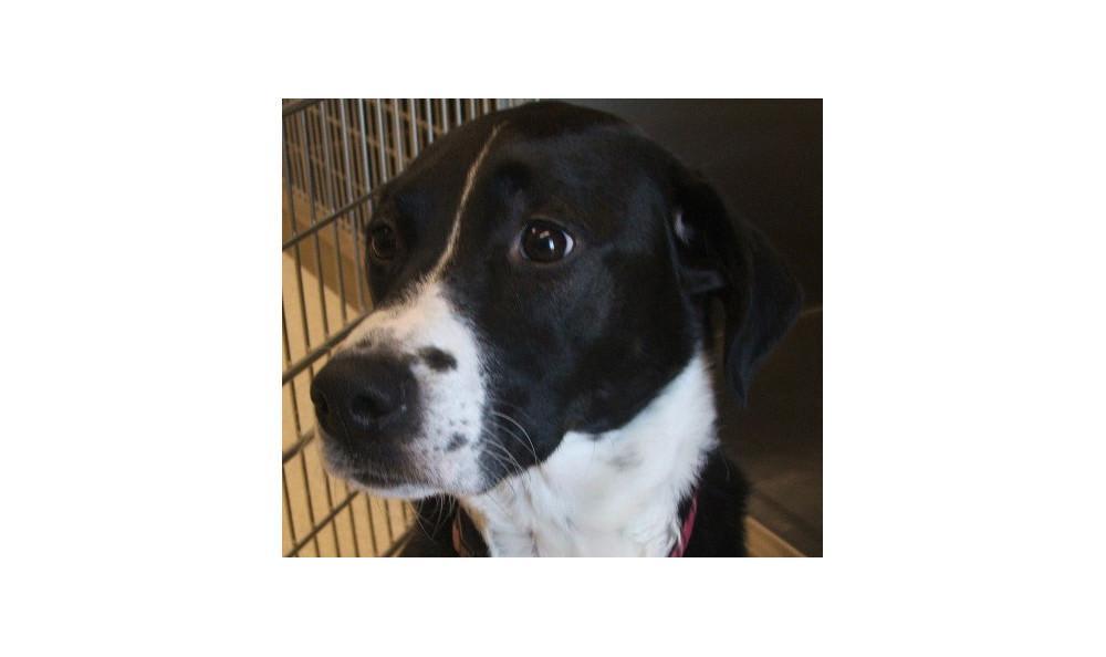 Mcintyre Leah the Dog at Lynnwood animal hospital