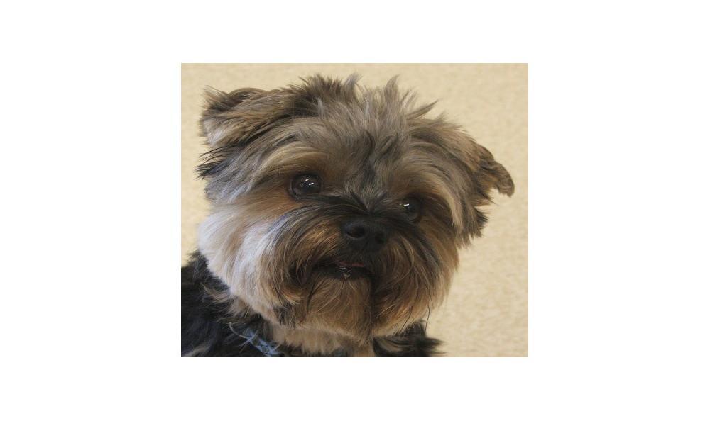 Mcintyre Mojo the Dog at Lynnwood animal hospital