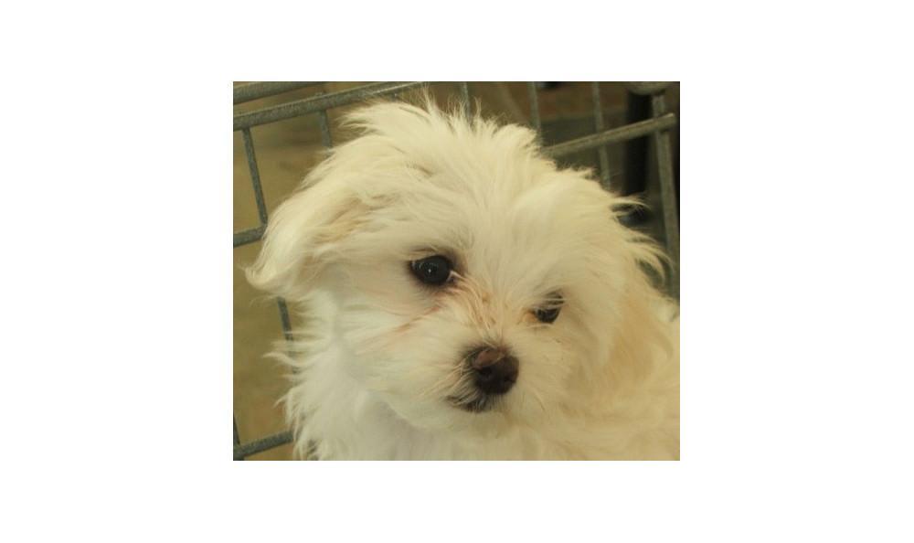 Mickey Wang the Dog at Lynnwood animal hospital
