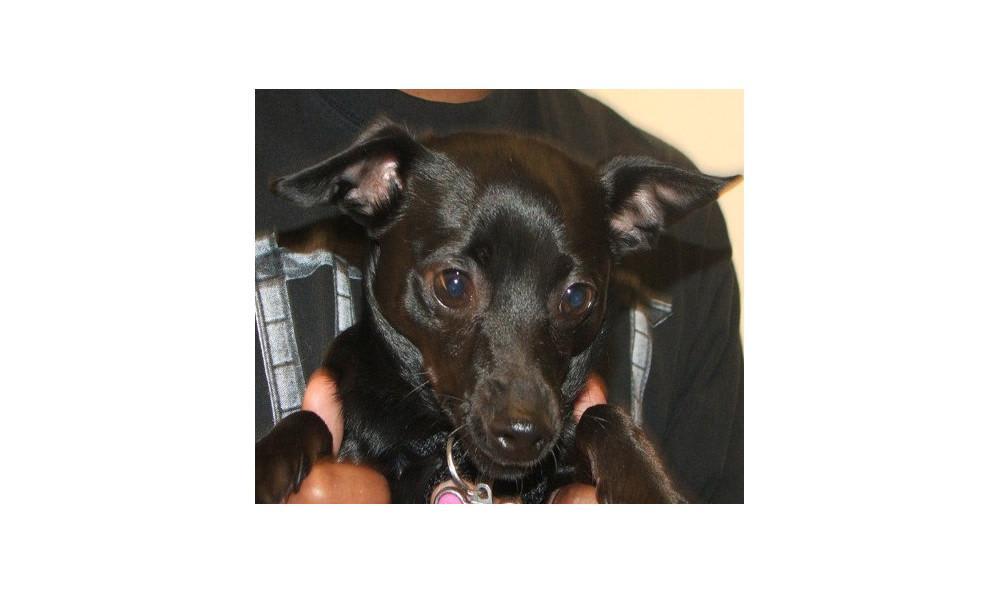 Vance Chanel the Dog at Lynnwood animal hospital
