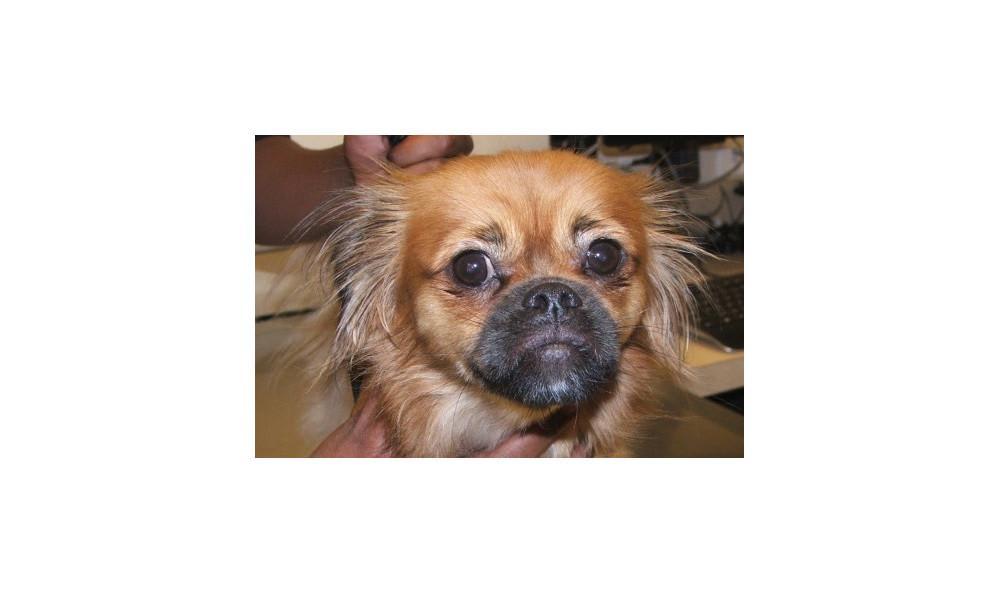 Vance Louie the Dog at Lynnwood animal hospital