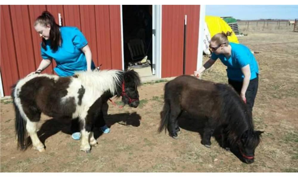 Brushing horses at Animal Hospital of Lubbock
