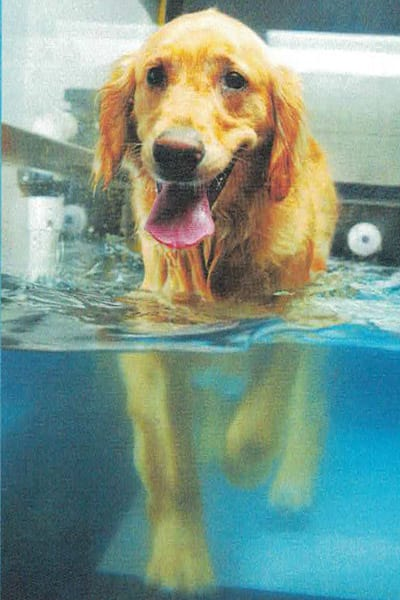 Hydrotherapy at Flying Cloud Animal Hospital in Eden Prairie, MN