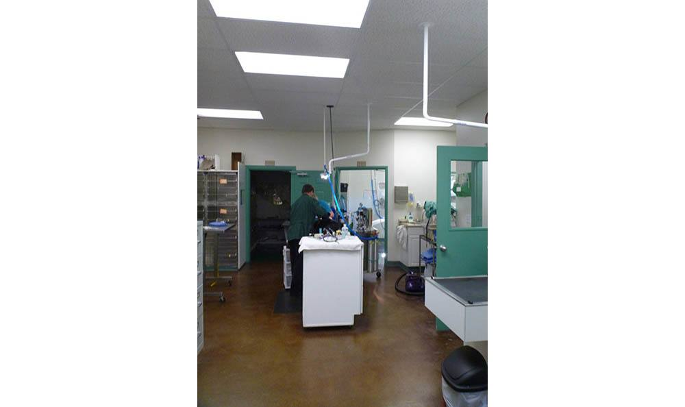 Surgery Area At Greywolf Veterinary Hospital