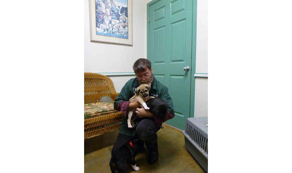 Veterinarian With Puppy At Greywolf Veterinary Hospital