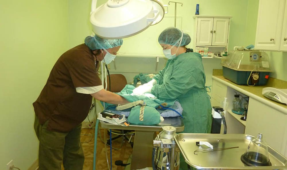 Surgery at Pacifica animal hospital